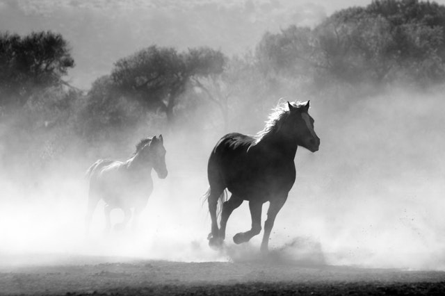 nature-animal-fog-freedom-52500